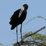 Ptaki Afryki
