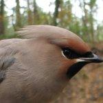 Ptaki Akcji Bałtyckiej